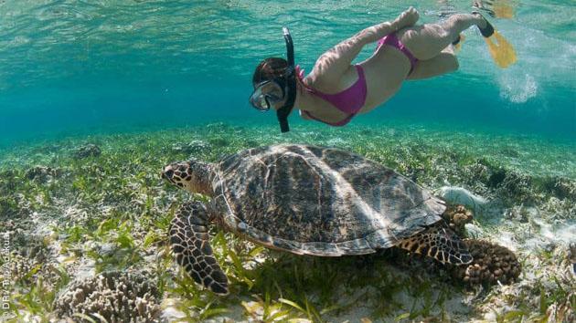Découvrez les plus belles plages et fonds marins des Caraïbes